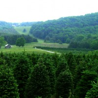 A Greene Tree Farm